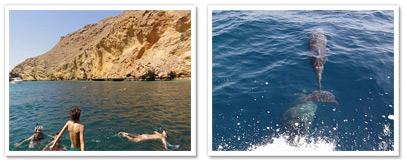 marine life oman