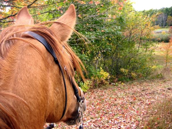 horseback-riding-autumn-Croatian-villas